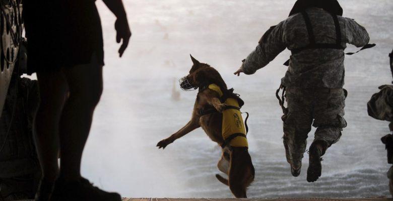 Συνεκπαίδευση των «Σκυλιών του Πολέμου» Navy Seals & …Των Ελληνικών Κομάντο της Μονάδας ΟΥΚ! (video)